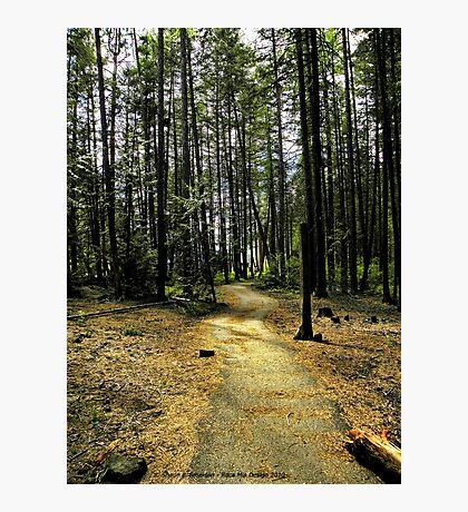 Kootenai Falls Trail Photographic Print