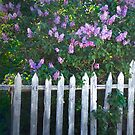 Lilac Fence by Arla M. Ruggles