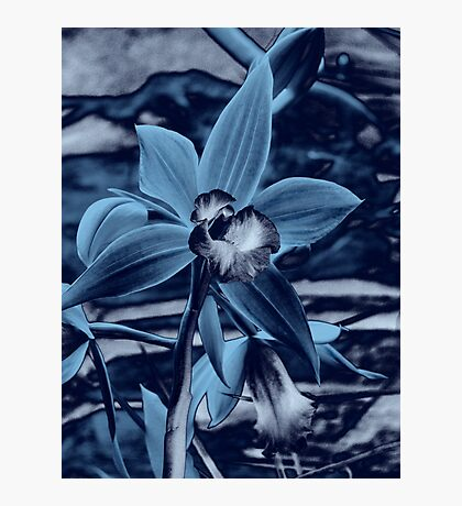 Orchid Collection - 5  Photographic Print
