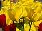 Yellow Sunlit Tulips Garden Spring art Baslee Troutman by BasleeArtPrints