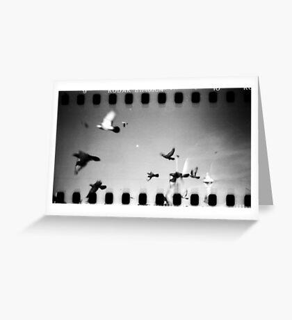 pigeons, phnom penh, cambodia Greeting Card