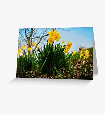 Daffodils Have Arrived Greeting Card