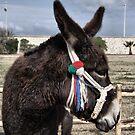 "Donkey by Pantelleria by Antonello Incagnone ""incant"""