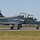 Hawk Trainer by Bairdzpics