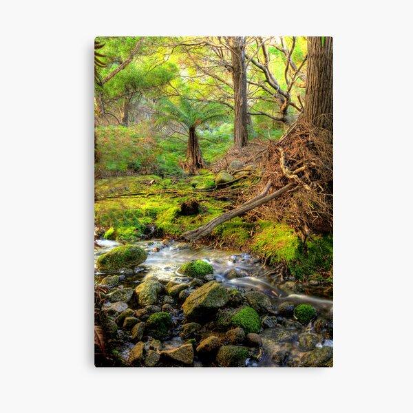 Mountain Stream - Flinders Island Canvas Print