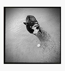 Fetch the ball Photographic Print