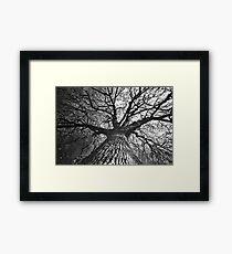 Monochrome Autumn Framed Print