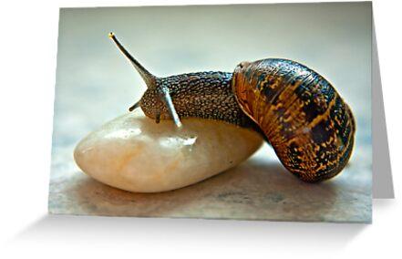 Garden Snail by Trevor Kersley