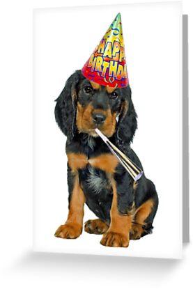 Gordon Setter Birthday Greeting Cards By CafePretzel