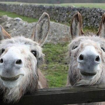 Smiling Donkeys! by MikePaget