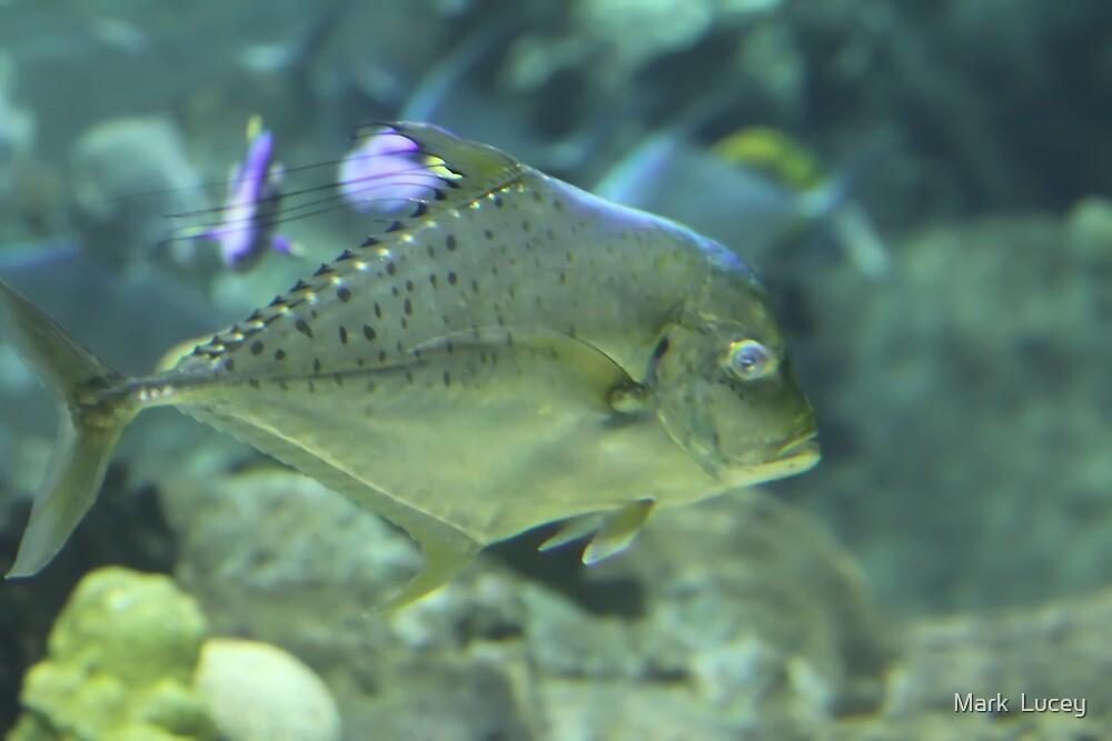 Fishy by Mark  Lucey