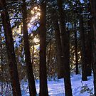 Winter deer trail at dusk by amontanaview
