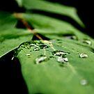 Garden Leaves by brucejohnson