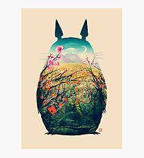 Tonari No Totoro Photographic Print