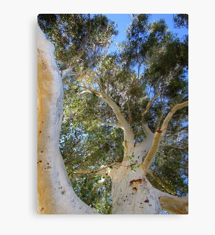 Mother Nature's Treehouse Canvas Print
