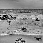 BIRD FEEDERS bw by Paul Quixote Alleyne