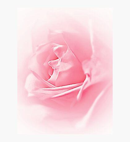 Portrait Of A Rose Photographic Print