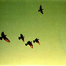 green sky birds, phnom penh, cambodia by tiro