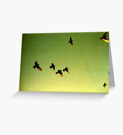 green sky birds, phnom penh, cambodia Greeting Card