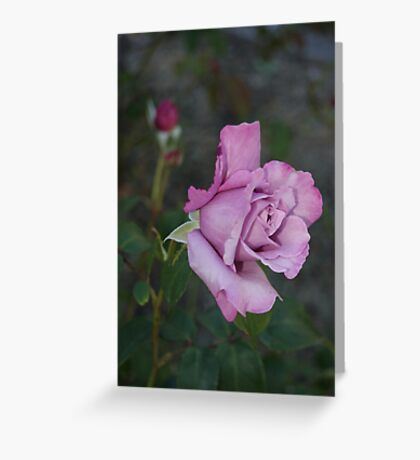 The Rose... Greeting Card