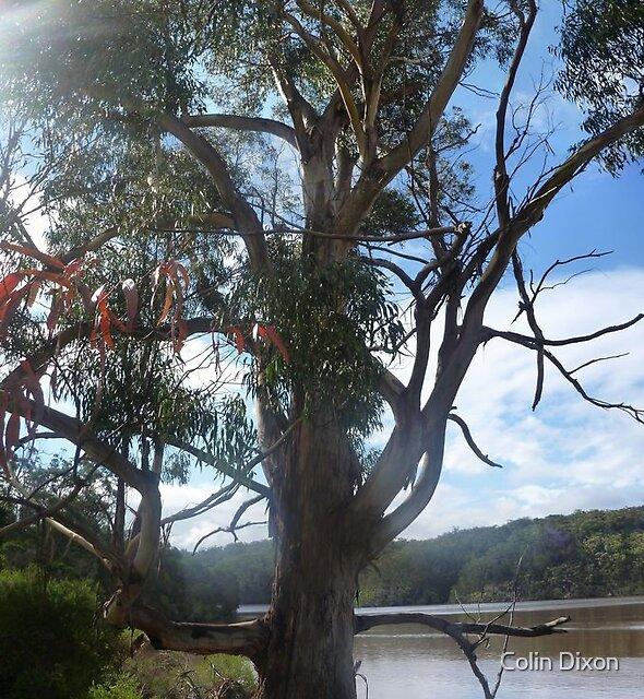Narrows Tree by Colin Dixon