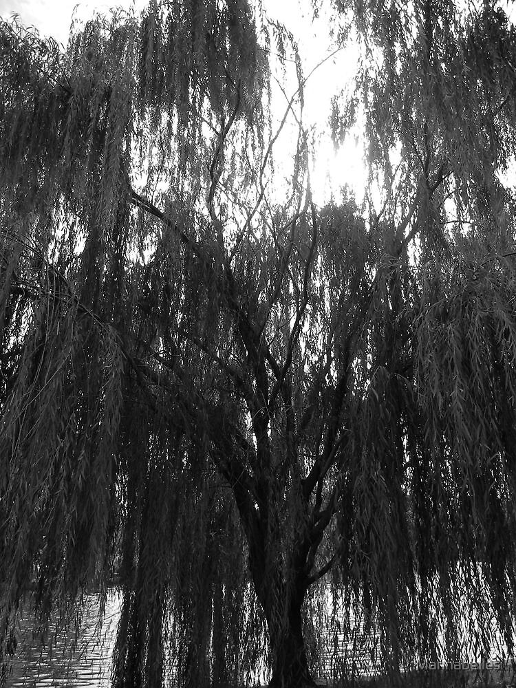 A Weeping Willow by Mannabelles