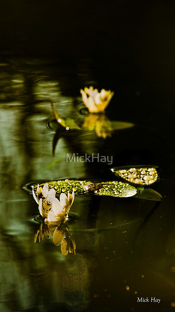 Another Reflection by MickHay