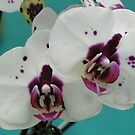 Orchid Faced by Indrani Ghose