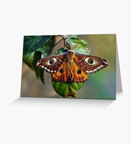 Una farfalla? Chi sa? Greeting Card