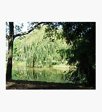~` Willow Lake `~ Photographic Print