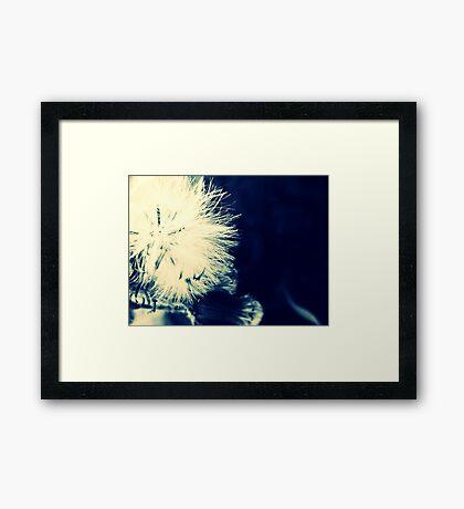 03-23-11:  Dull But Pleasant Framed Print