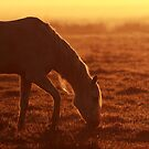First light on the ranch by Phillip  Simmons