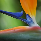 Tropical Wings by christiane