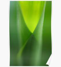 galangal green Poster