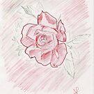 Indian Rose by Akash Puthraya