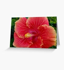 Huge Lovely Red Hibiscus Greeting Card