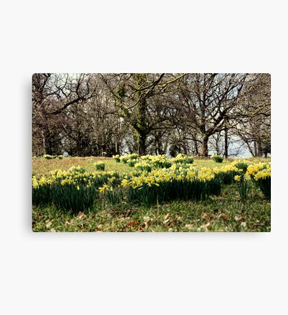 Spring on the Crom Estate Canvas Print
