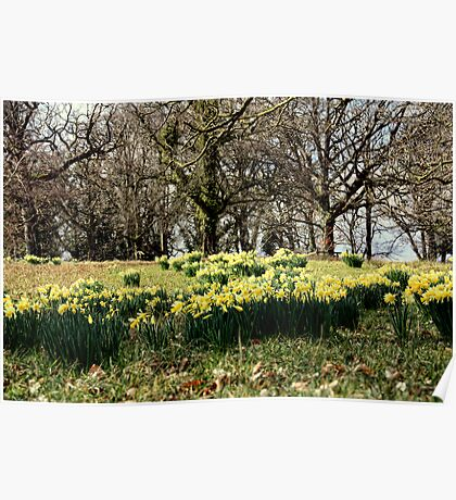 Spring on the Crom Estate Poster