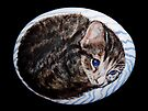 Kitten (painted on beach pebble) by Mike Paget