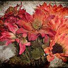 Petals © by Dawn Becker