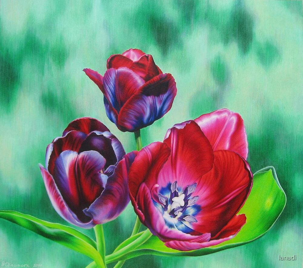 Wine-colored Tulips by lanadi