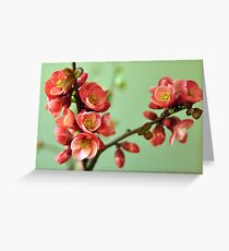 Sprigs of  Spring Greeting Card