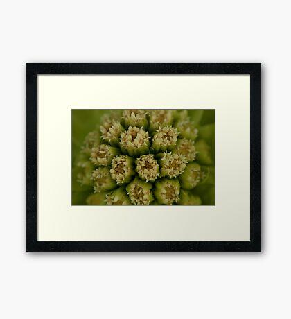 Natural mandala of little cream flowers Framed Print