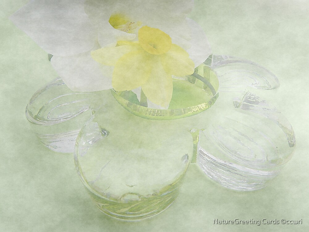 Translucent Daffodils, and Glass Daisy by NatureGreeting Cards ©ccwri