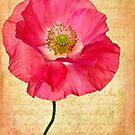 A Shirley Poppy for Akira by Leslie Nicole
