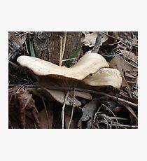 SHELF FUNGUS - CREEKSIDE Photographic Print