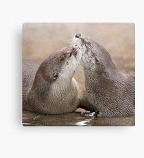 Otter kisses Metal Print