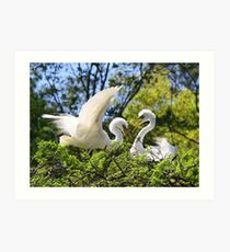 Great White Egret's Art Print