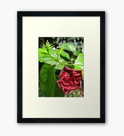 Beauty in Focus, in Soul, and in All Framed Print