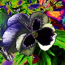 Pansies in disguise.. by Elaine Game